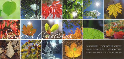« Seasons's greetings »16 motieven « herfstbladeren ». 6 talen.
